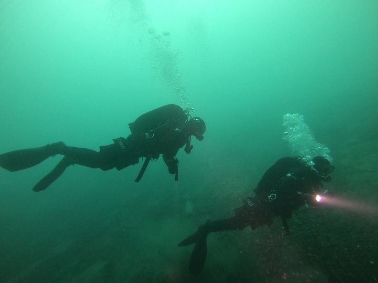 Two Scuba Divers underwater in Milford Sound